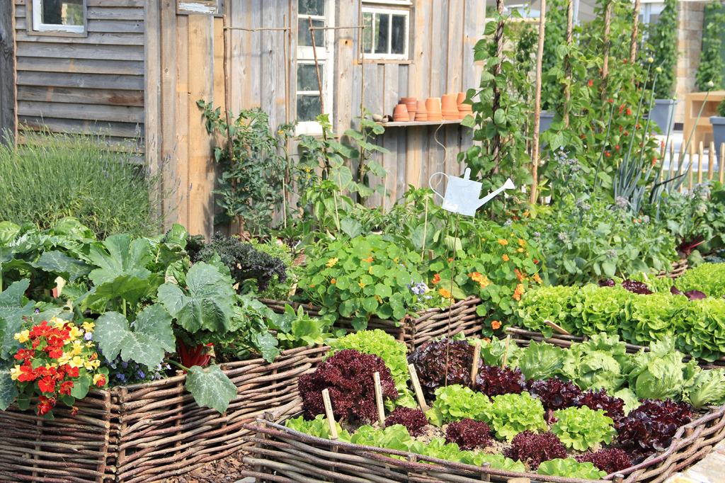 growing vegetables at home in veggie patch