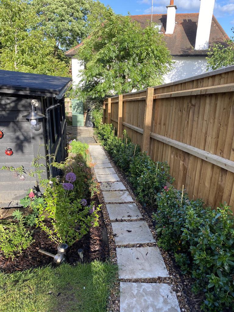 Escallonia hedge in garden