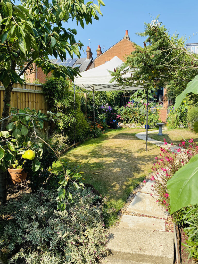 Our gazebo provides us with an instant garden privacy screen